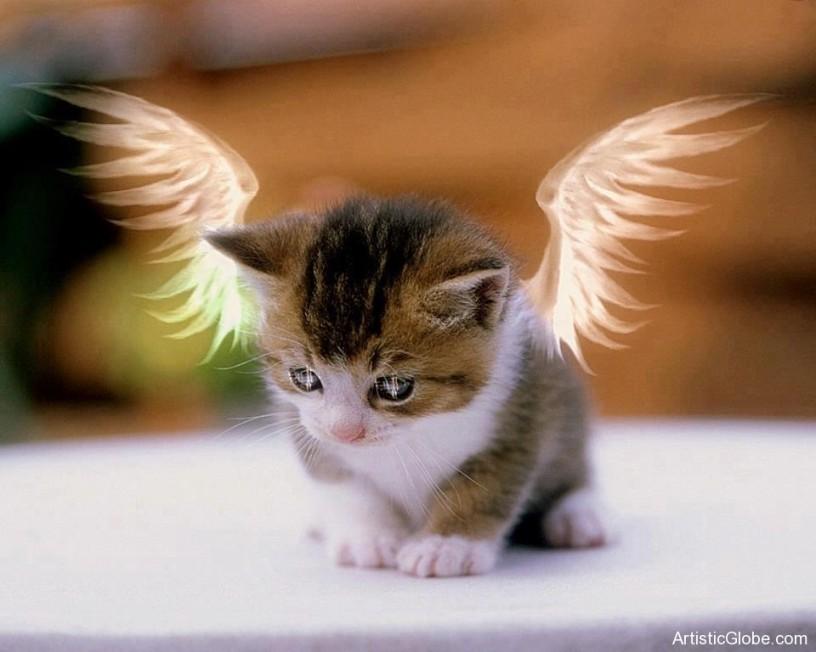 Cute-Cat-Angel